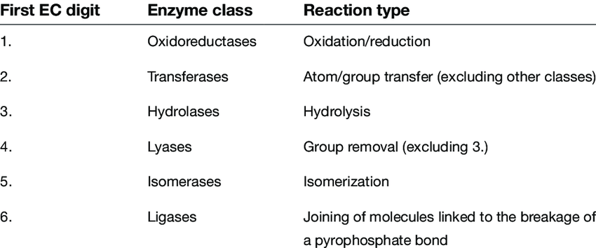 Enzymes Functions
