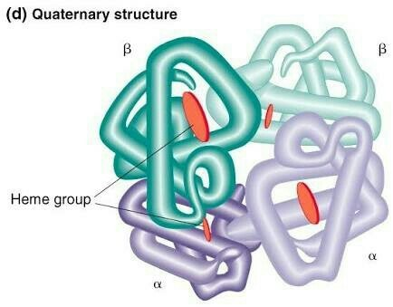 Proteins Functions